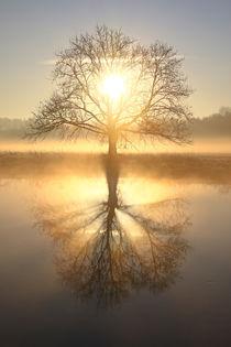 Die Sonne im Zentrum by Bernhard Kaiser