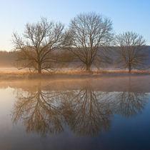 3 Bäume von Bernhard Kaiser