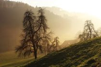 A Foggy Day- Nebellandschaft by lisebonne