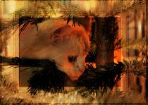 Weihnachtkarte Katze 1 von artfulhorses-sabinepeters