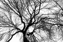 Tree of Shadow and the Vast White Sky von John Williams