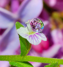 Flowers in a drop on the background of lilac von Yuri Hope
