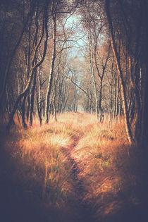 'Birkenpfad im Kaltenhofer Moor' von Peter Eggermann
