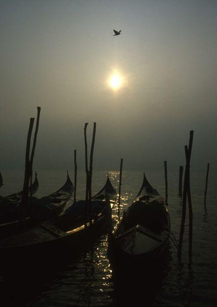 Venedig-taube-008ret