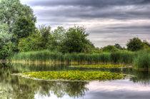 The Lily Pond  von David Pyatt