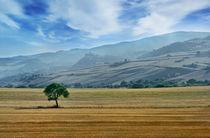 Italian countryside von Tania Lerro