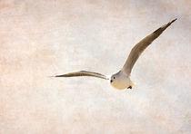 FLY HIGH von sisyphos