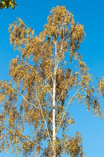 Sommerlicher Herbsthimmel von toeffelshop
