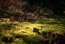 Herbstblätter in der Mooswiese von Reinhard Kepplinger