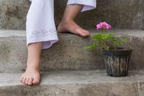 Pinkish Geranium Cranesbill Flower And Feet by Masoud Rezaeipoor