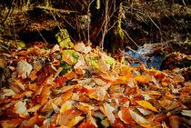 Farben des Herbstes von Reinhard Kepplinger