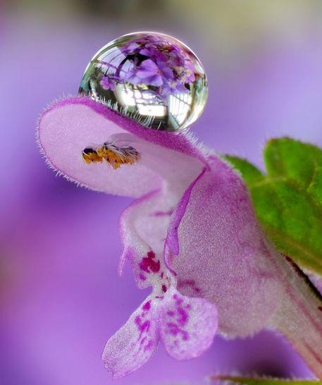 Flower-little-dragon