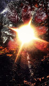 Sunlight von Michael Naegele