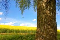 Unterm Birkenbaum von darlya