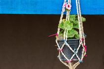 Detail of hanged flower vase von Masoud Rezaeipoor