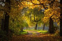 Herbstliche Allee by Simone Rein