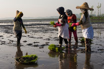 Group of women ready to work on rice farm by Masoud Rezaeipoor