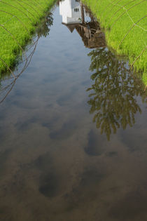 Rice farm with human foot trace and buildings reflection on water by Masoud Rezaeipoor