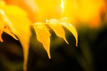 Herbstlaub von mroppx