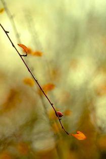 Mit Licht durchflutet III von © Ivonne Wentzler
