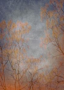 Landscape-05