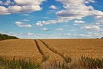 In Golden Fields by Vicki Field