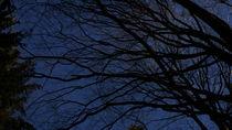 Äste im Herbsthimmel von Reinhard Kepplinger