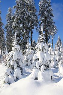 Winter im Sauerland von Bernhard Kaiser