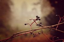 Novemberbeeren by leddermann