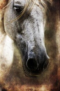 close up von artfulhorses-sabinepeters