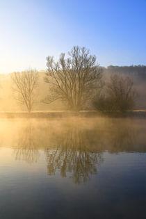 Bäume und Nebel by Bernhard Kaiser
