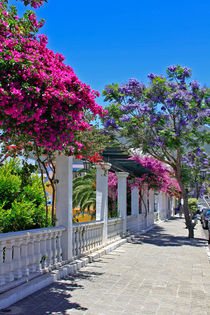 Jacarandabäume und Bougainvilleas  by monarch