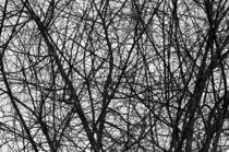 Natural Trees Map von cinema4design