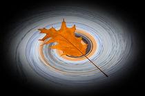 Floating leaf von feiermar