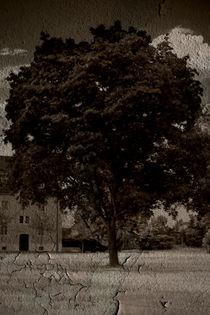 Der alte Baum  von Bastian  Kienitz