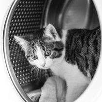 Katze in Schwarz-weiß von Franziska Mohr