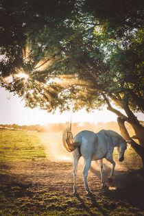 Pferd im Gegenlicht von Franziska Mohr