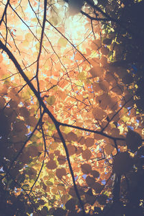 Blätter in herbstlichen Farben von Peter Eggermann