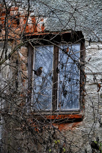 'View of an old house - The birds' von Chris Berger
