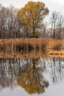 A Mirror of Two Trees