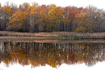 Autumn Trees Reflections by Jennifer Nelson