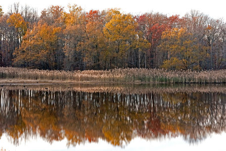 Autumn-colors-mirror-087