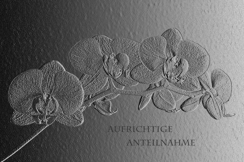Trauerphalanteiln-dot-0695a-dot-f1a