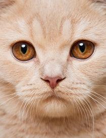 Dsc-6110-dot-2-bkh-kitten1-12-15