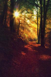 autumn solar flare by Katarjina Telesh