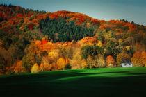 colorful autumn von Katarjina Telesh