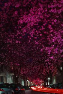 Cherry blossom by Katarjina Telesh