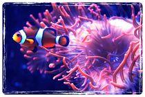 Finding Nemo!  von Susanne  Mauz