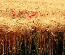 Poppy Cereals von Susanne  Mauz