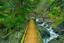 Kawazu waterfall trail, Izu Peninsula, Japan von Sara Winter